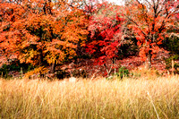 2012-11-19-Lost Maples-86